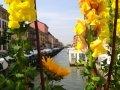 Navigli Flower Market